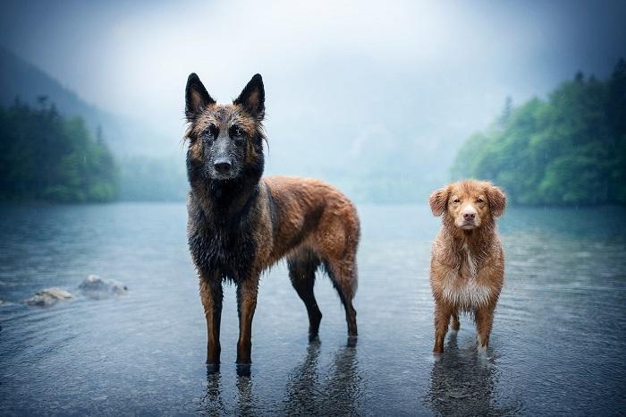 Если собака дружественно расположена к фотографу, то снимки получаются намного более живыми и яркими.