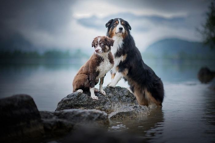 Для дополнительной мотивации австрийский фотограф предлагает использовать любимую игрушку собаки или лакомства.