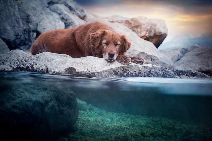 На своих снимках Энн Гейер старается поймать «тот самый» момент, чтобы сделать фотографию эмоционально насыщенной.