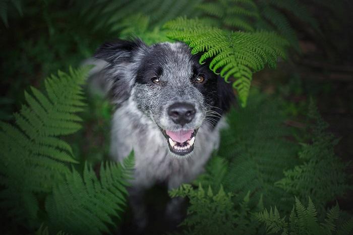Довольный домашний питомец австрийского фотографа позирует в зеленых зарослях папоротника.