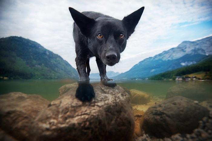 Собаки Синди, Финн и Юри являются для Энн Гейер источником вдохновения, чем вносят немалый вклад в творчество талантливого фотографа.