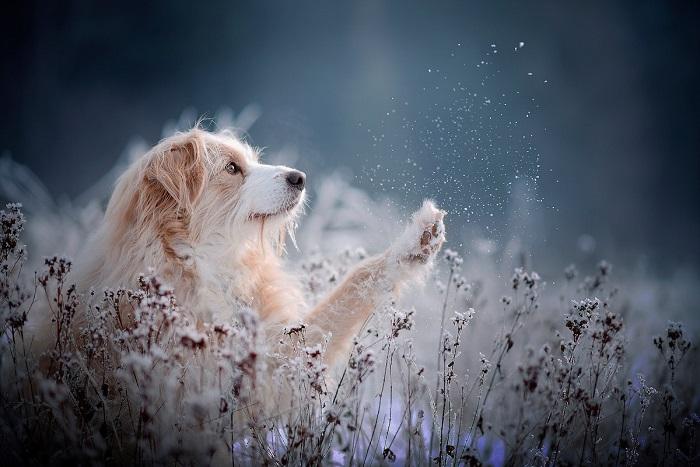 На снимках австрийского фотографа песики выглядят естественными и… совершенно очаровательными.