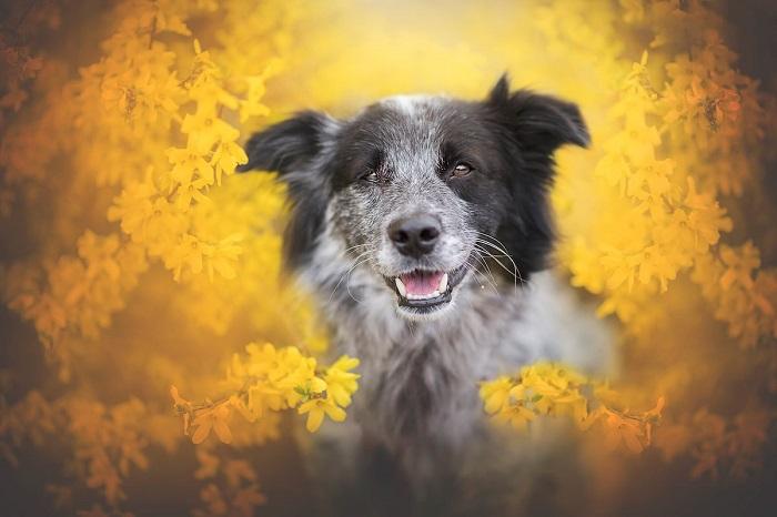 Сегодня у Энн Гейер живет три собаки – Синди, Финн и Юри, которые часто становятся героями ее великолепных фотографий.