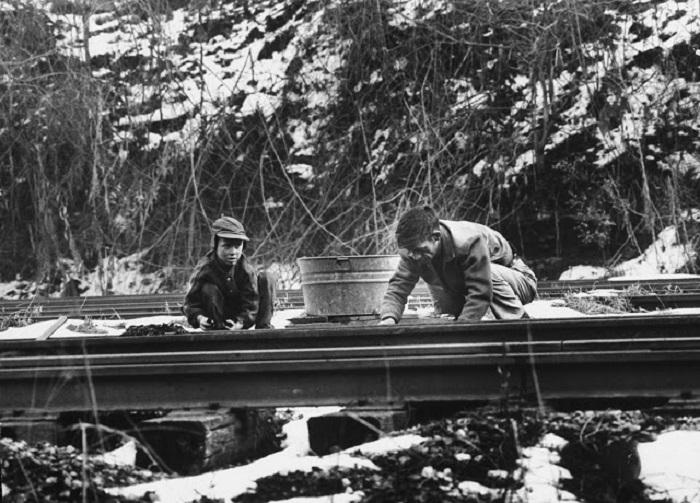 Отец и сын собирают на железной дороге уголь.