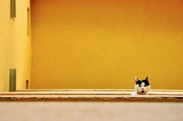 Минималистичные фотографии, способные подарить безмятежность.
