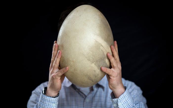 Яйцо, которое, согласно прогнозам, будет продано на аукционе Summers Place Auctions в Биллингсхерсте за 30 – 50 тысяч фунтов стерлингов.