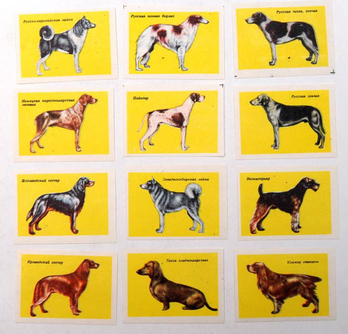Уникальные породы собак, которые были широко известны в стране.