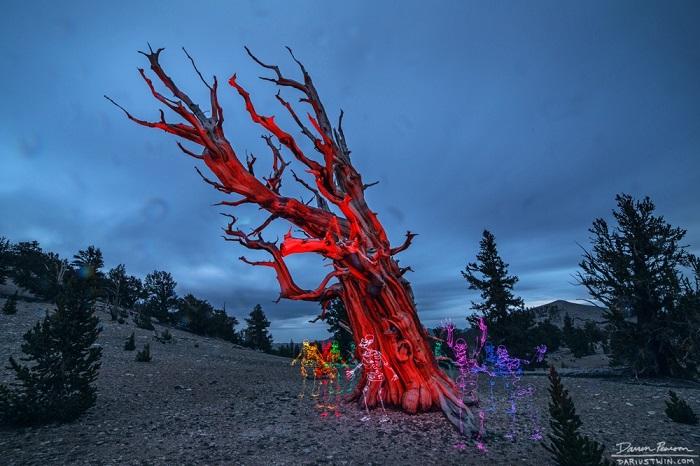 Даррен Пирсон (Darren Pearson), создает такие оригинальные работы при помощи неонового света и фотоаппарата.