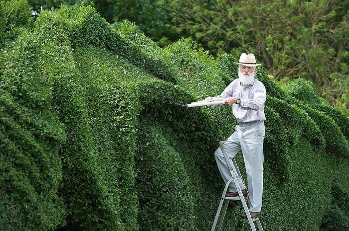Джон Брукер, создатель этой прекрасной скульптуры, тщательно следит за своим детищем и регулярно состригает отросшие веточки и листочки.
