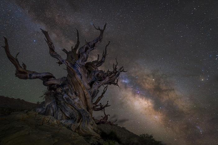 Фото из национального леса Инйо, Калифорния.