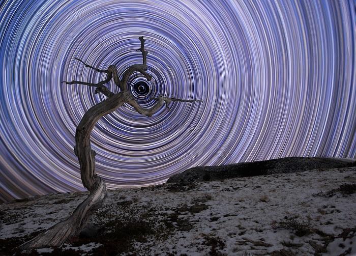 Скалистые горы Монтаны и выветрившееся можжевеловое дерево на фоне созвездия Урсы Малой.