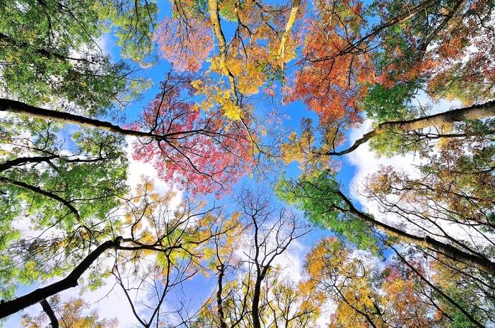 Осень - удивительное время года.