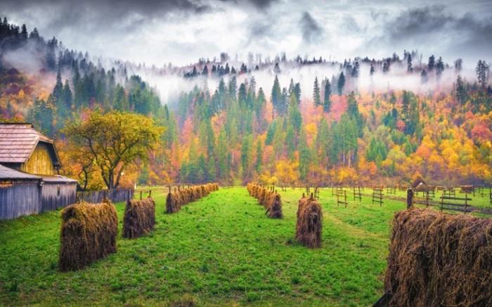 Время первых желтых листьев и последних цветов в саду.