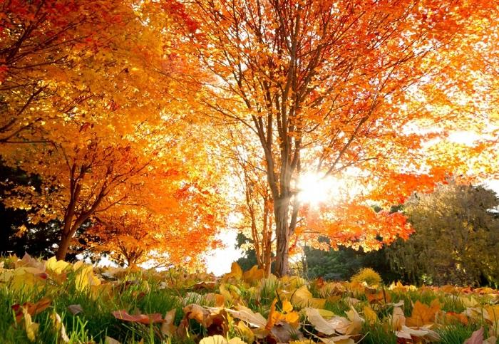 Осень - самое время для поэзии.