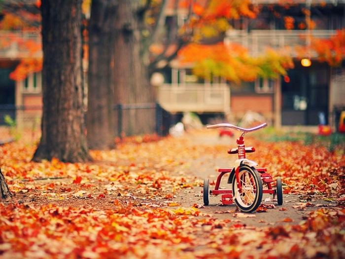 На смену солнечному и теплому лету пришла осень, постепенно отвоевывая свои права.