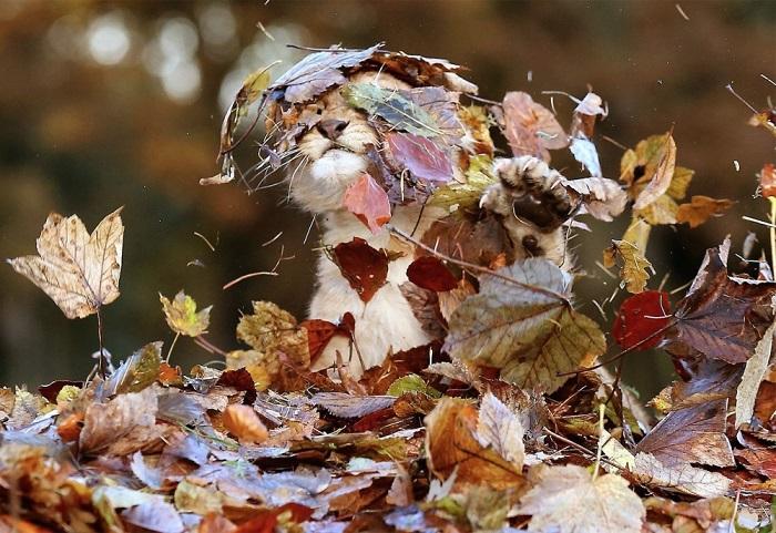 Львенок безуспешно пытается уговорить листья вернутся обратно на деревья.