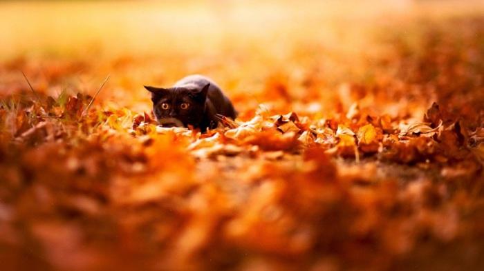 Прогулка молодого котёнка.