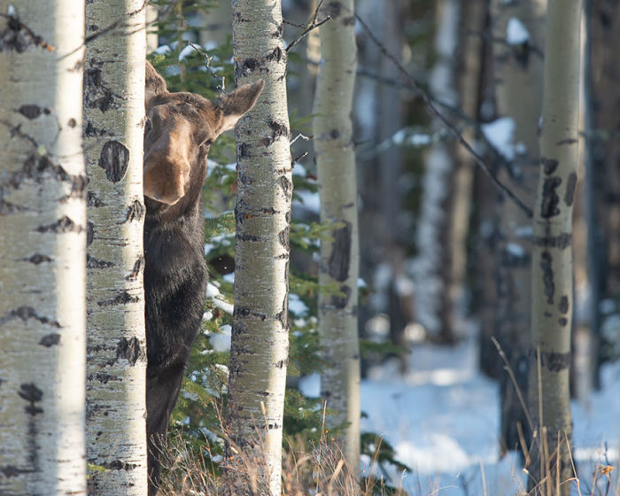 Автор снимка – канадский фотограф Джейми Буси (Jamie Bussey).
