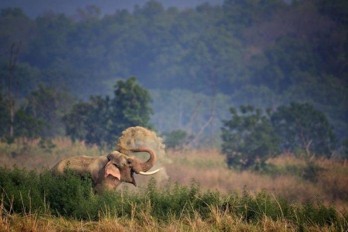 Автор снимка – фотограф Ануп Деодхар (Anup Deodhar) из Индии.