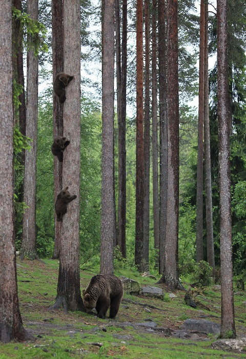 Автор снимка – фотограф Вальттери Мулкахайнен (Valtteri Mulkahainen) из Финляндии.