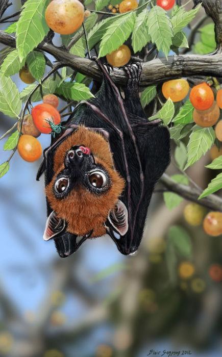Летучая мышь повисла на плодовом дереве.