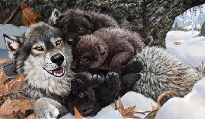 Волчица с волчатами в тесном семейном кругу.