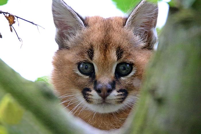 Красивое животное.