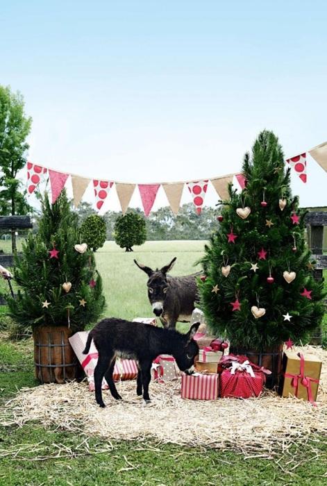 Все любят получать подарки и даже маленькие ослики.