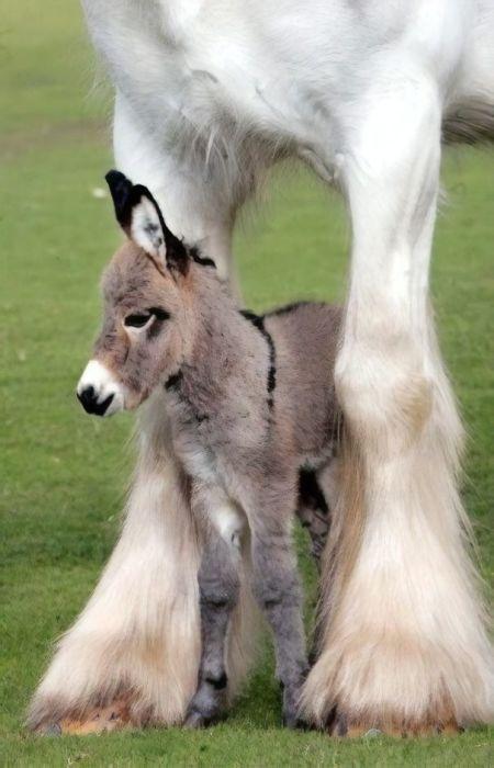 Малыш комфортно чувствует себя возле большой лошади.