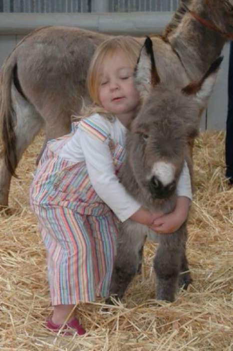 Ослик отлично ладит с  маленькой девочкой.