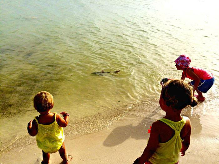 На Анегаде девочки увидели на мелководье плавающих детенышей акулы.