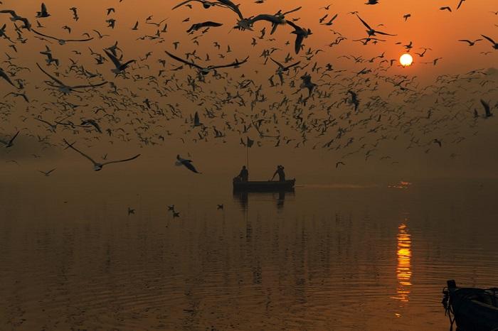 Темные силуэты парящих чаек кажутся нереальными на фоне завораживающего зимнего восхода солнца.