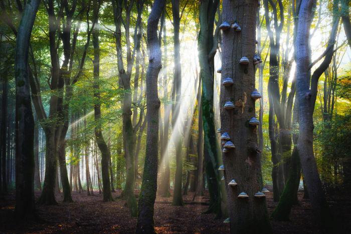 Грибы-разрушители, которые питаются древесиной пока она превращается в труху.
