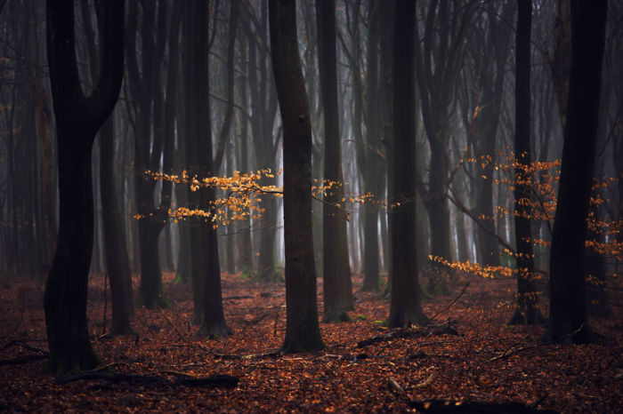 Тишина осеннего леса.