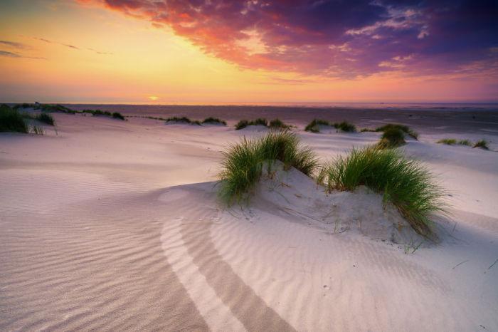 Заповедник песчаных дюн Северных Нидерландов.