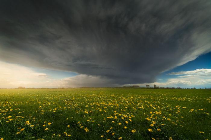 Огромная дождевая туча над цветочным полем.