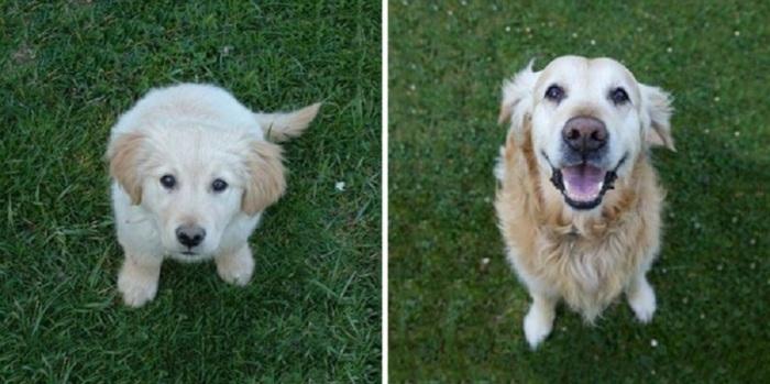 Пёс изменился до неузнаваемости!