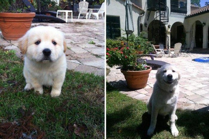Сначала оберегали пса, а теперь наоборот.