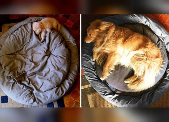 Спустя год щенок уже дорос.