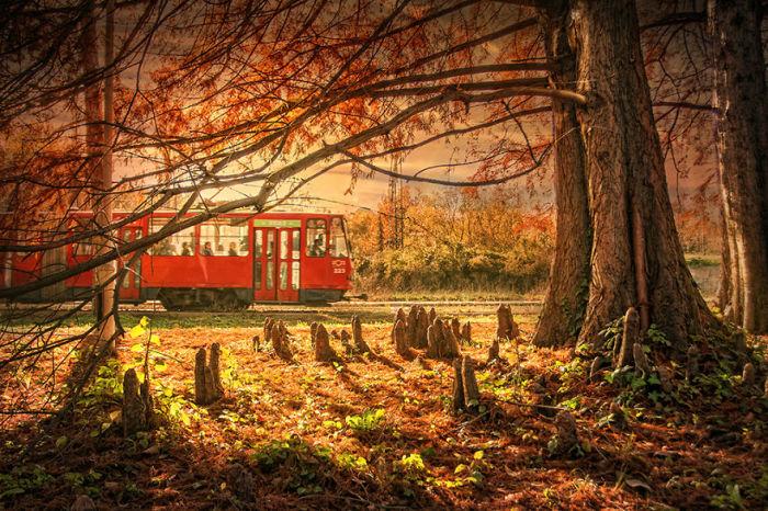 Один из старейших парков Белграда, любимое место отдыха его жителей.