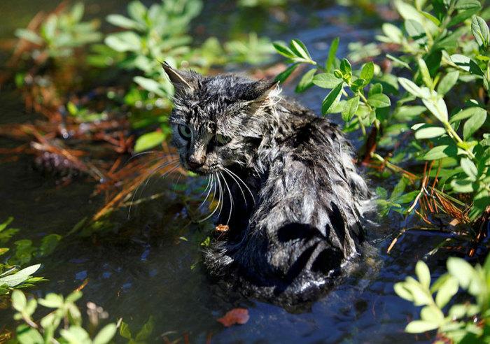 Кошка сидит в воде, которая осталась от урагана в центре города Николс, штат Южная Каролина.
