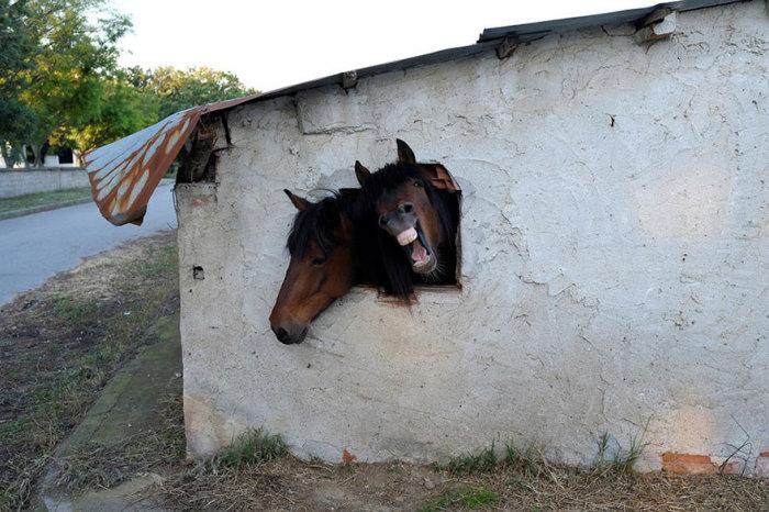 Лошади выглядывают в окно, приглашая заглянуть к ним в гости. Греция.