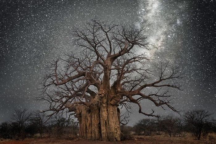 Все снимки, вошедшие в волшебную серию «Бриллиантовые ночи», были сделаны фотографом в безлунные ночи.
