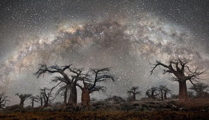 Объединив науку и искусство, американский фотограф Бет Мун смогла создать потрясающие и захватывающие снимки древних гигантов Земли.