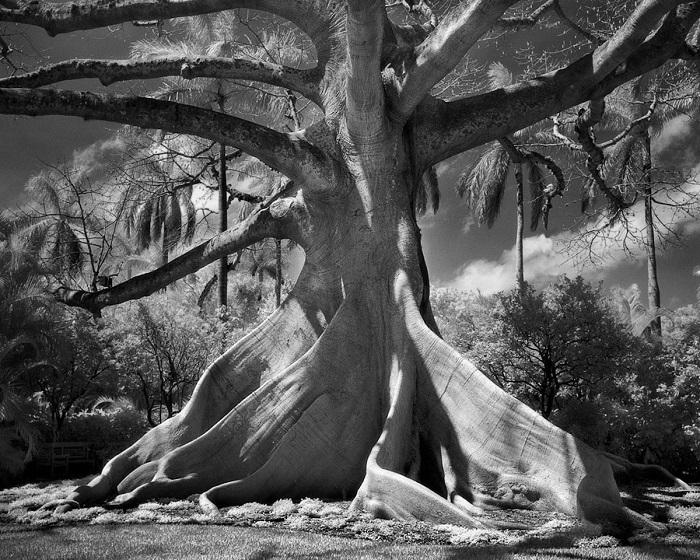 Величественное дерево с плоскими корнями является одним их священных символов в мифологии Майя.