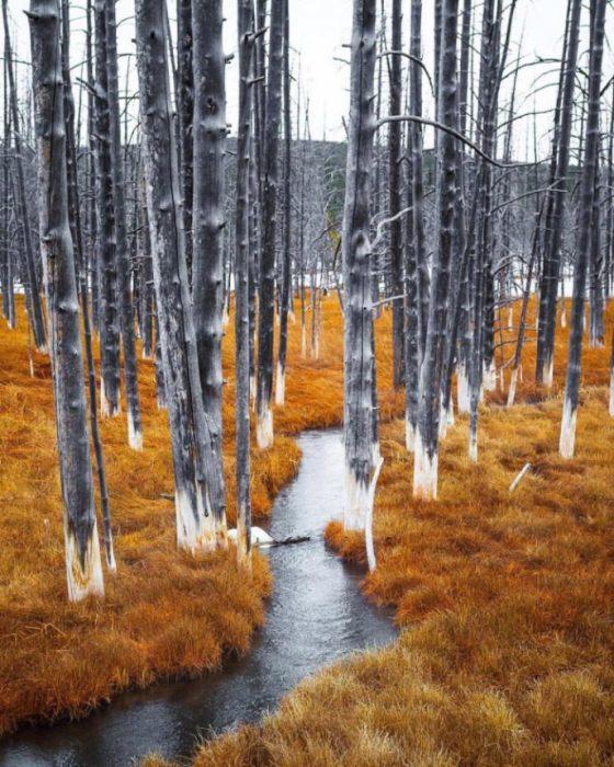 Осенние деревья в Национальном парке Йеллоустон в Вайоминге, США.