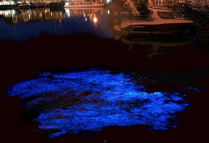 Биолюминесцентный фитопланктон.