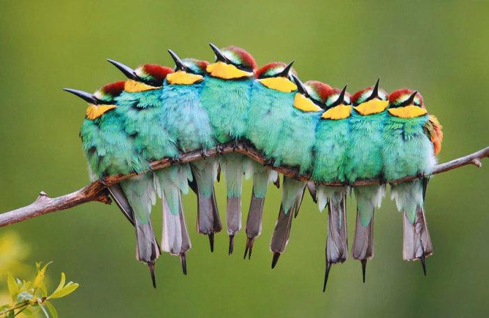 Картинки по запросу 20 трогательных фотографий птиц, которые заботятся о своих птенцах