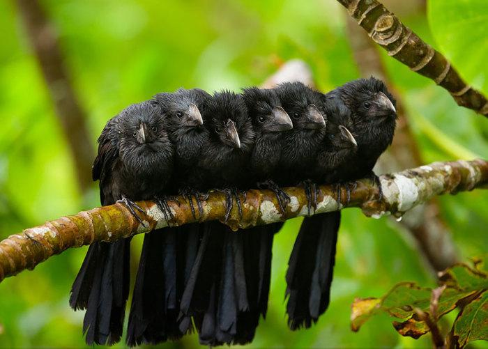 Семеро ани прижались друг к другу, чтобы согреться.