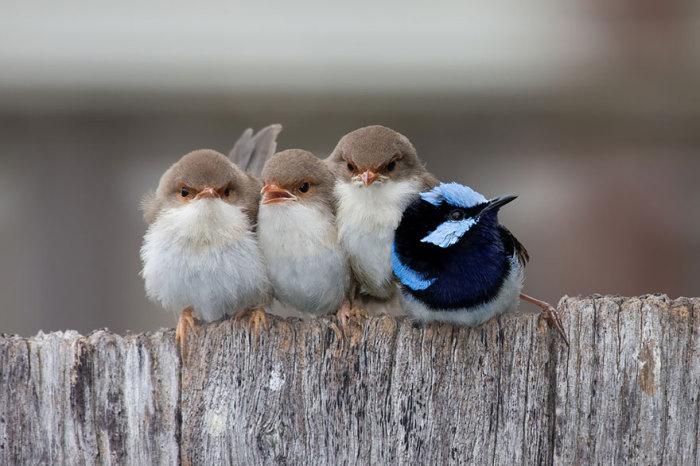 Озябшие птенцы.